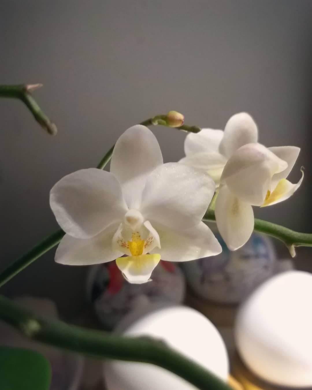 Orquídeas: Significados e Como Cultivar