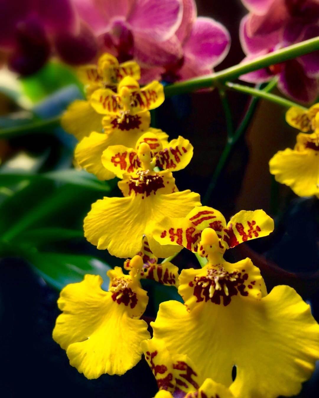 Tipos de Orquídea: Conheça as Variedades e Significados