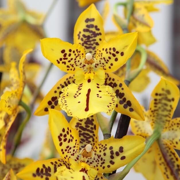 Como Cultivar Orquídeas: Melhores dicas!