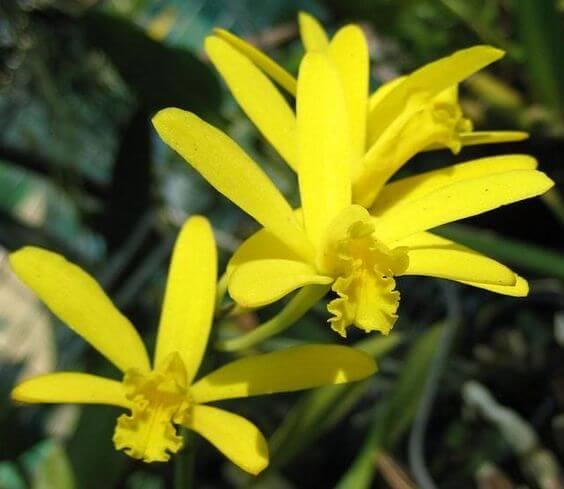 Orquídeas Raras: Quais são e Cuidados Necessários