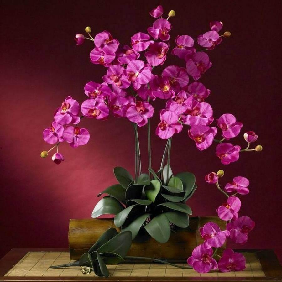 Tipos de Flores: Conheça Cada Uma Delas!