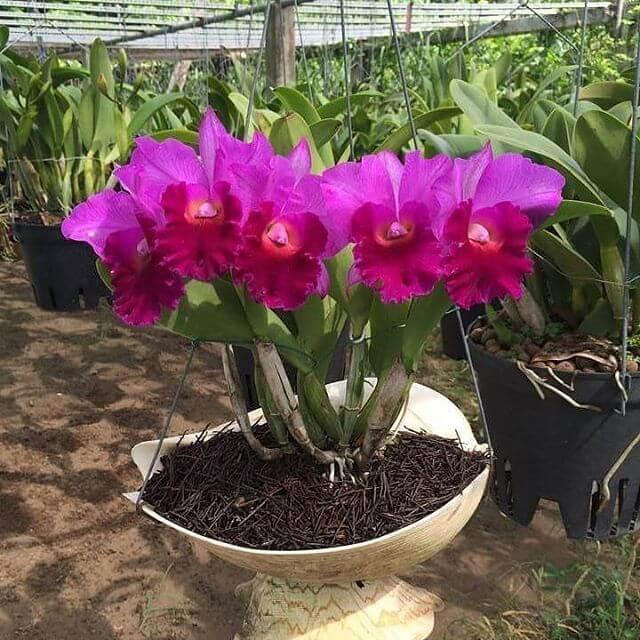 Como Plantar Orquídeas: Diferentes Espaços para Cultivar