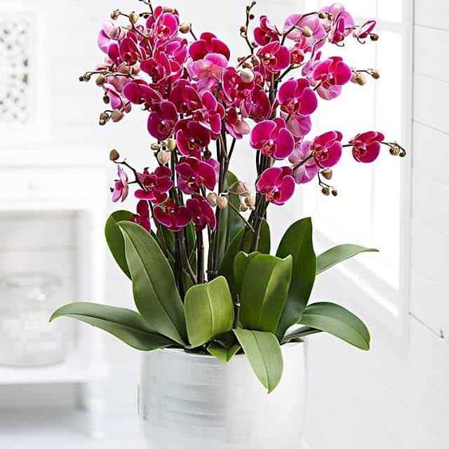 Como Plantar Orquídeas: Conheça suas Características