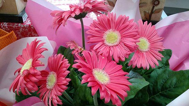 azaleia rosa linda