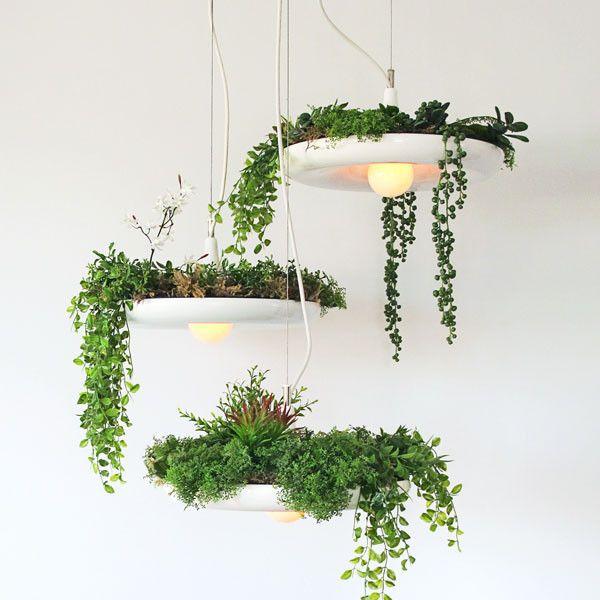 plantas em luminária