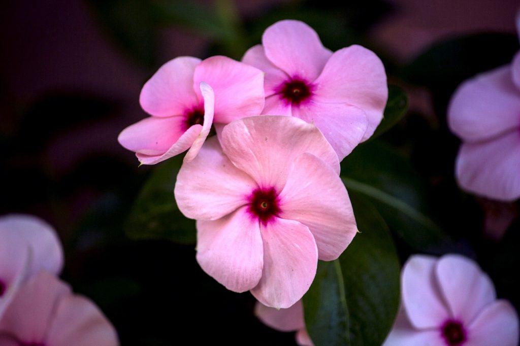 beijo-pintado rosa