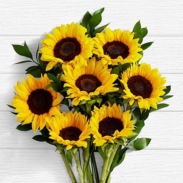 Flores amarelas - Significado e 7 tipos para perfumar o seu jardim! -