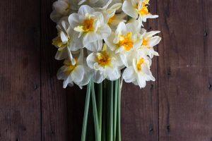 narcisos brancos