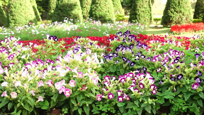 torênias em jardim