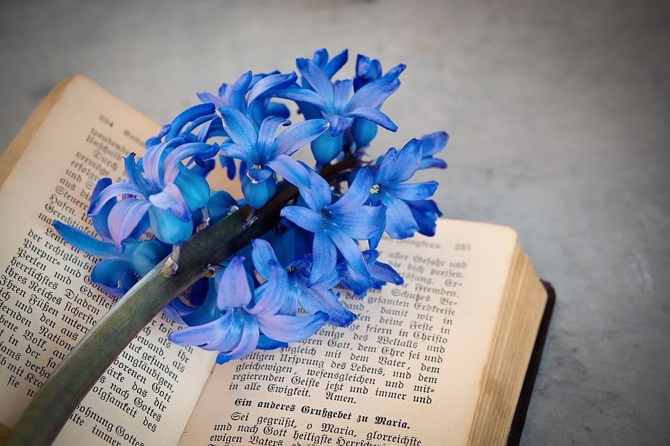 Jacinto Azul