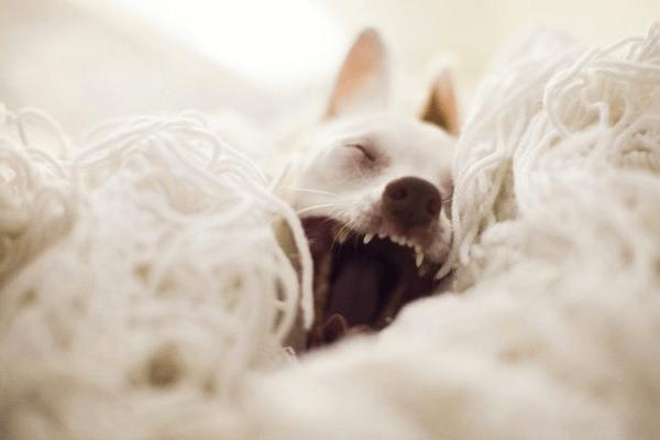 Como acostumar cachorro a dormir sozinho? Aprenda aqui!