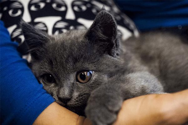 Vantagens e desvantagens de castrar gato: passo a passo e dicas