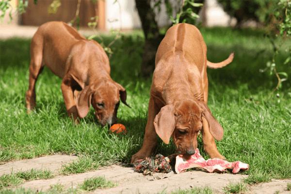 Alimentos que previnem câncer nos cachorros: quais são? O que comprar?