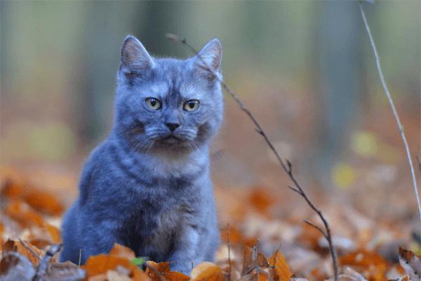 Nomes de Gato Macho: Lista Completa!