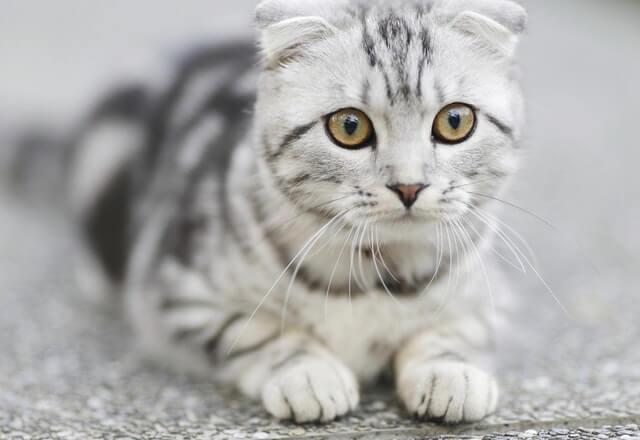 Cuidados com vermes em seu gato: prevenção, remédios e mais