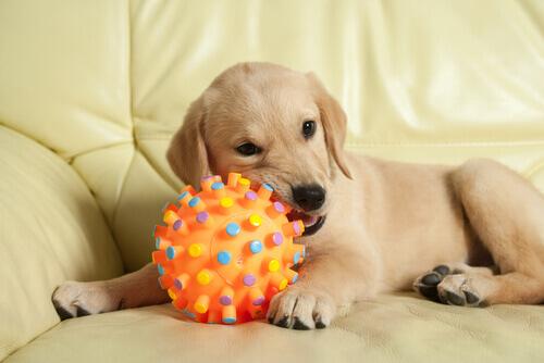 Cachorro mordendo uma bola de brinquedo