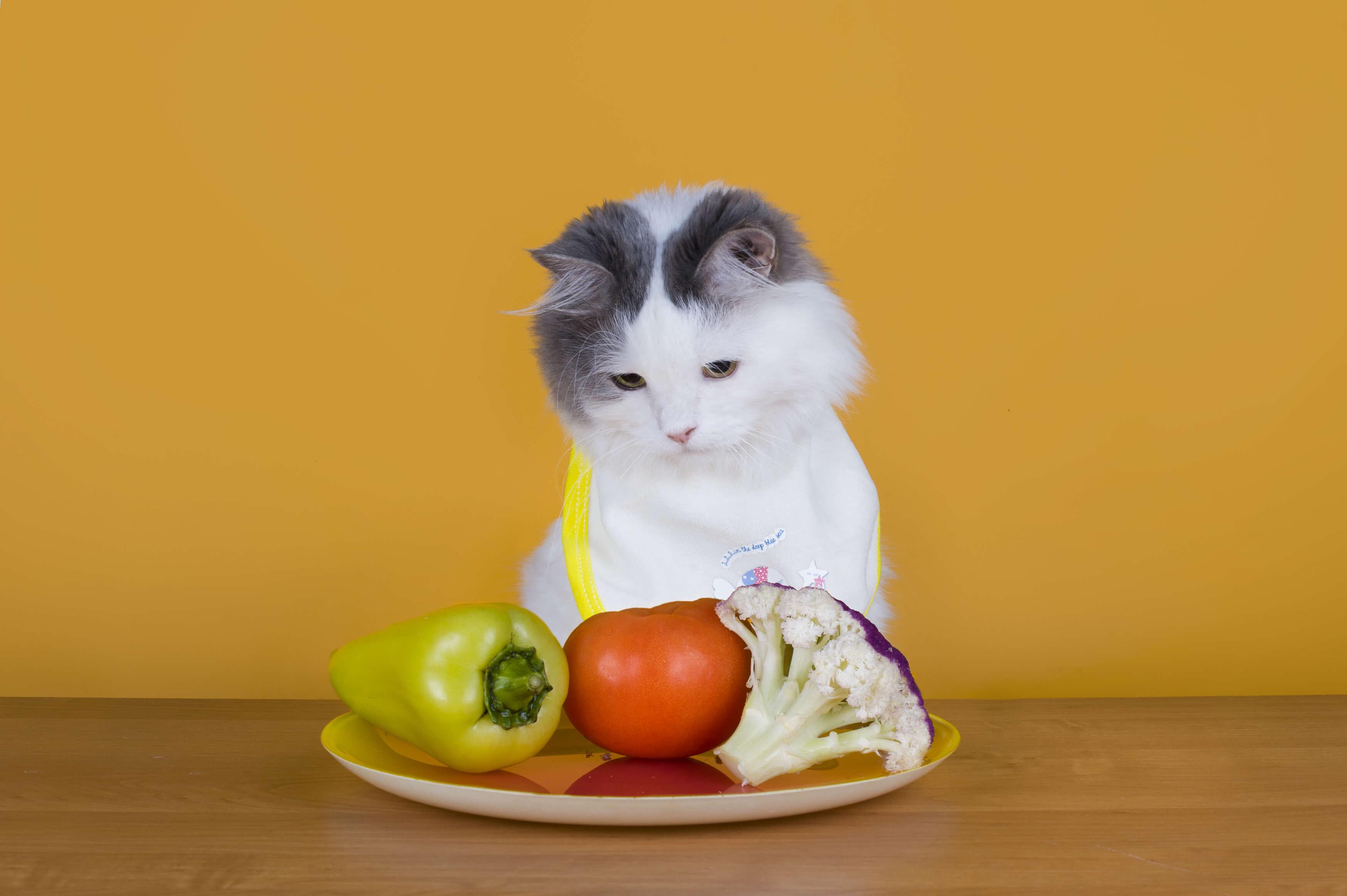 Alimentação natural para Gatos