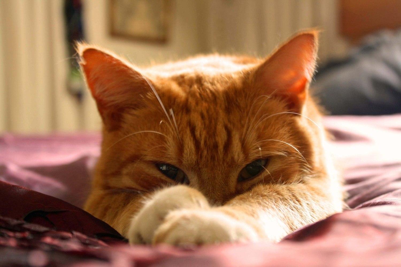 Cosméticos para gatos