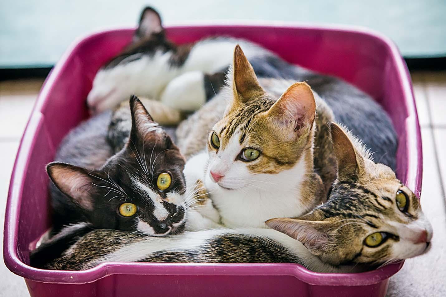 Serviço de hotel para gatos