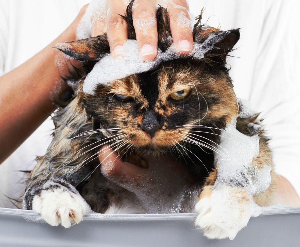 banho em gato