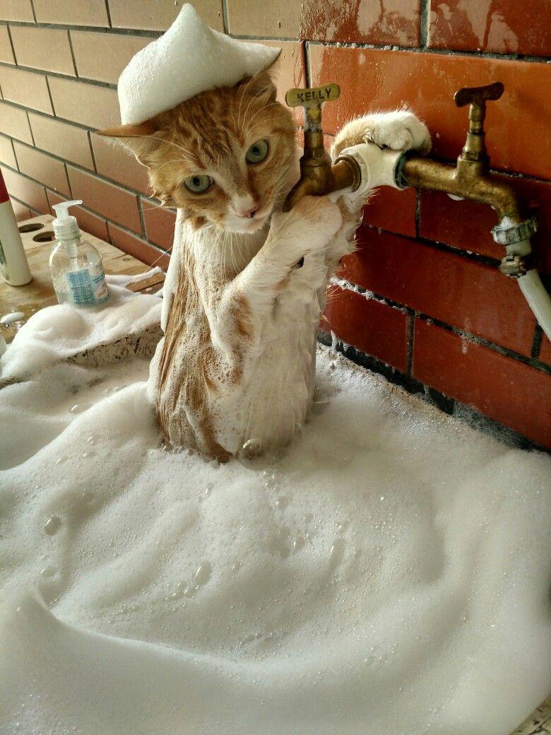 condicionador em gatos