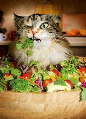 gato comendo verduras