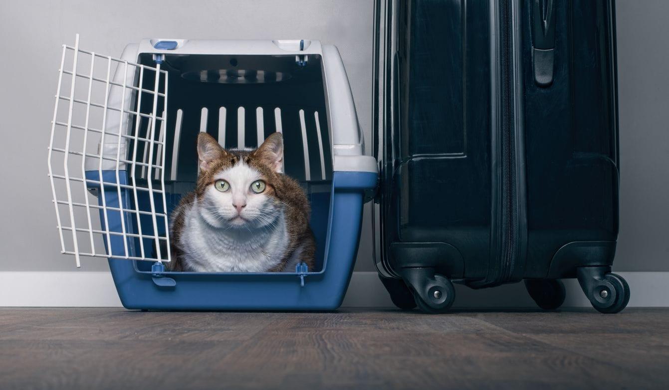 viagem gatos