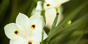 moreira planta amarela