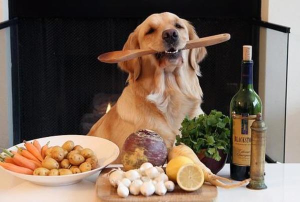 Alimentação Natural Feita Para Cachorros: Aprenda Aqui!