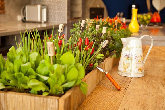 pequena horta montada em balcão de cozinha