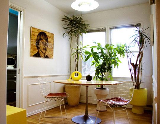 decoração de casa com plantas