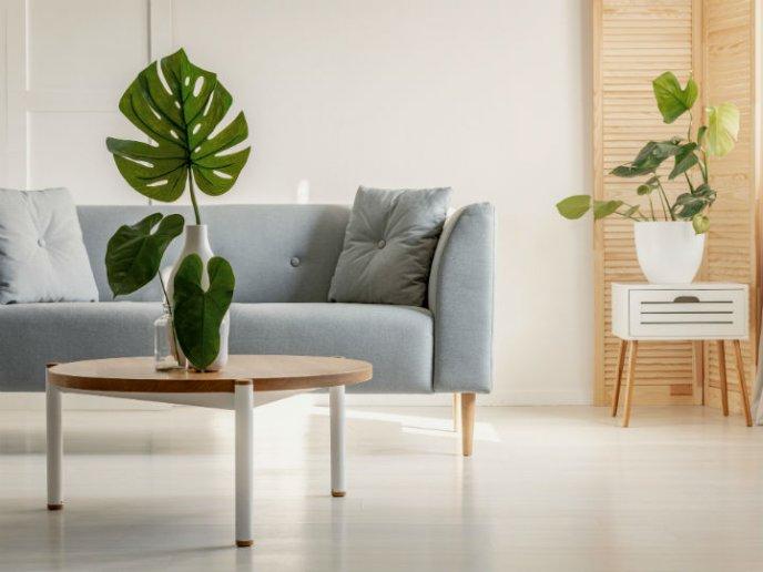 sala minimalista com plantas